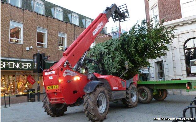 Dinmore Christmas Trees