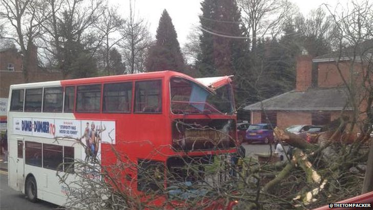 Tree falls onto a bus