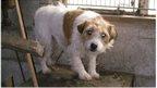 Cruelty cases double in five years