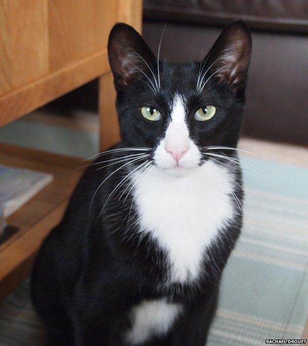 The Ipswich Cat Burglar