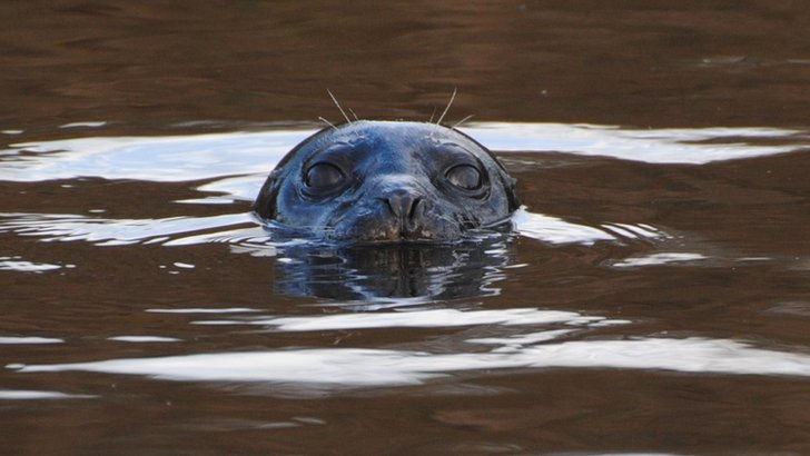 Seal in Chester-le-Street