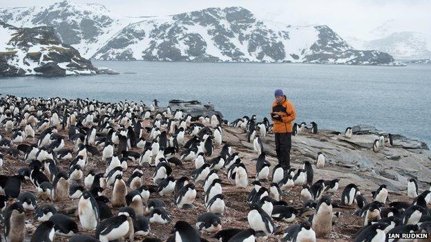 Stacey Adlard with Adelie penguins on Signy Island