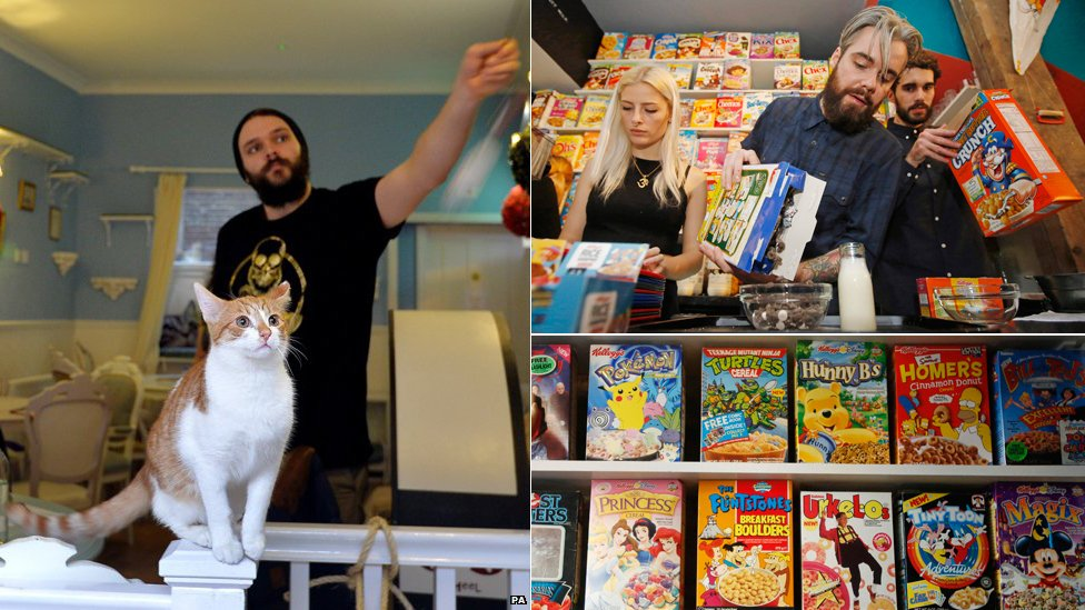 Cat and cereal cafes