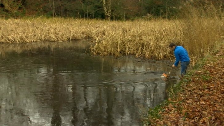 Water fleas being caught