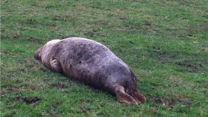 Seal in Warrington
