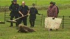 Police and animal welfare officers rescue seal found in a field near Newton-le-Willows