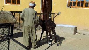 Hector the donkey
