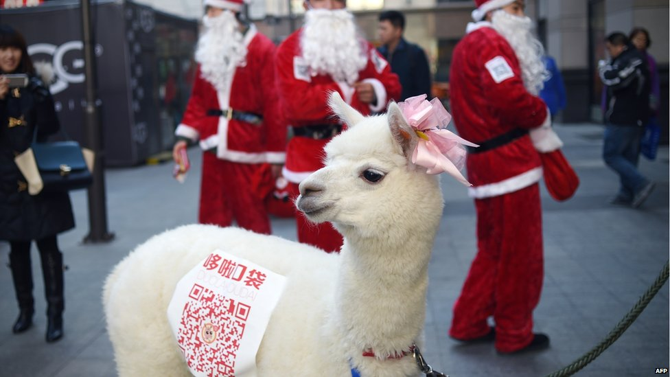 An alpaca is used during a sales promotion in Beijing on December 25, 2014. Christmas - once banned in China - has exploded in the atheist nation in recent years, with marketers using everything from saxophones and smurfs to steam trains to get shoppers to open their wallets