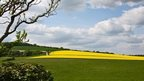 Field of oilseed rape in West Sussex