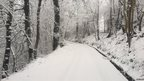 Snow covering a narrow road and bare trees.