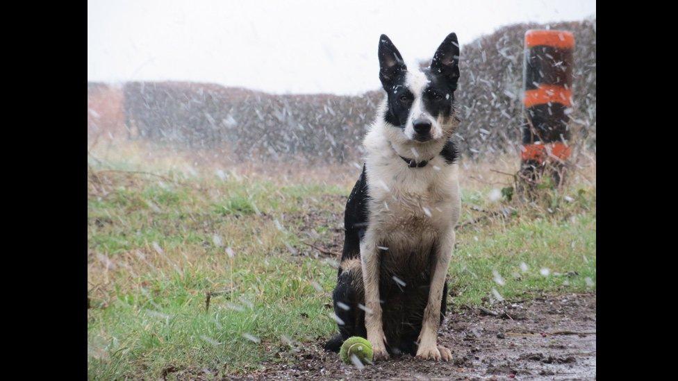 Dog Shows In Lochaber
