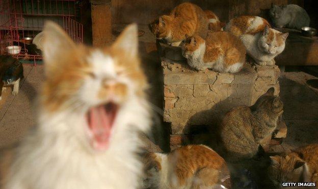 Stray cats in Beijing