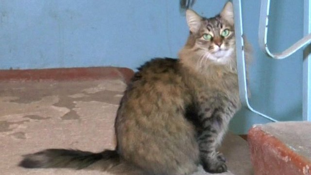 Russian cat saves baby abandoned in stairwell bbc news