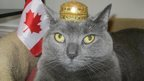 Cat wearing a small crown with a Candaian flag. Photo: Peter Crawford