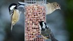 Birds sat on a feeder