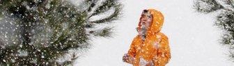 A boy looking at a fir tree
