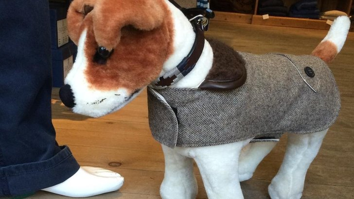 Dog teddy in a coat