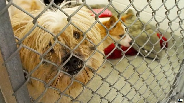 A dog looking through the wire in a shelter