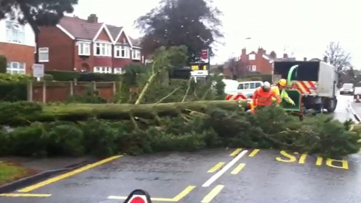 Fallen tree in Mickleover