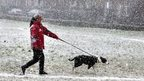 Dog walker in snow