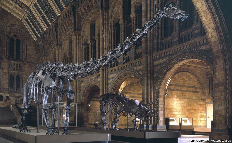 """""""Диппи"""" - искусственный скелет динозавра"""