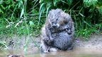 Beaver video courtesy Tom Buckley