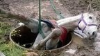 Horse being rescued from well