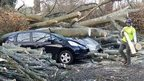 Tree crushes cars