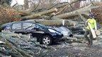 Tree crushes cars