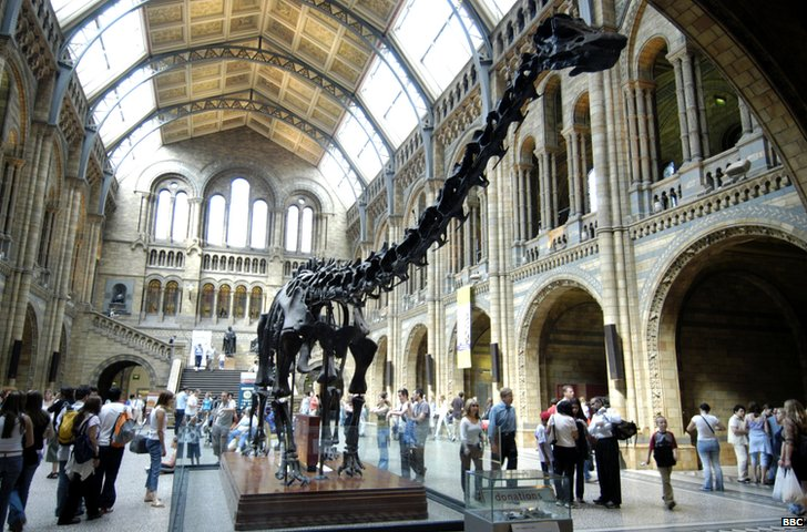The NHM's diplodocus skeleton