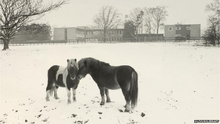 Ponies at Leahurst Campus