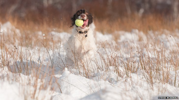 Dog playing with tennis ball