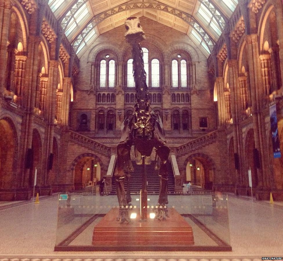 Farewell To Dippy!