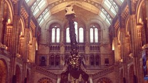 Dippy on display in the Hintze Hall. Photo by Nathalie Diaz