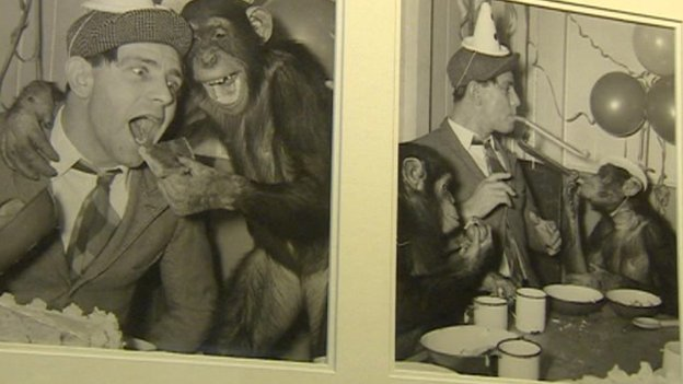 Norman Wisdom with chimps at London Zoo