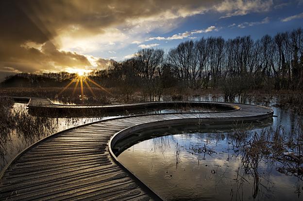 'Twisted Path' by Jenifer Bunnett
