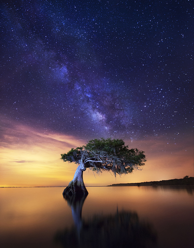'Celestial Cypress' by Paul Marcellini