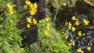 BBC News - Brecon flower named after Sir David Attenborough