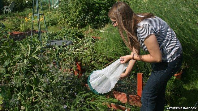 Allotments in urban areas provide habitat