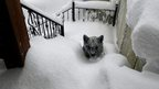 A cub covered in snow is walking up stairs which are also covered in thick snow.