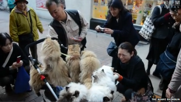 People greeting the cats