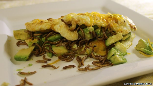 Mealworm omelette