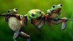 Image Name: Frog story