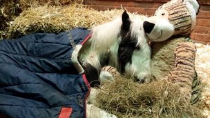 Gizmo the foal and soft toy