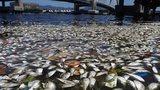 dead fish RIo