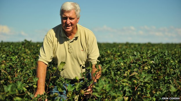 "Peter Corish inspects a crop of cotton on the family's Goondiwindi property, ""Mundine"" in Australia"