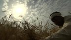 Bright sun in sky above Indian farmer harvesting crop