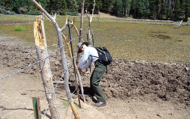 Martha Hahn fixing hole in fence.