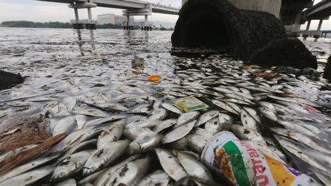 Thousands Of Dead Fish Found Near Rio Olympic Sailing Venue