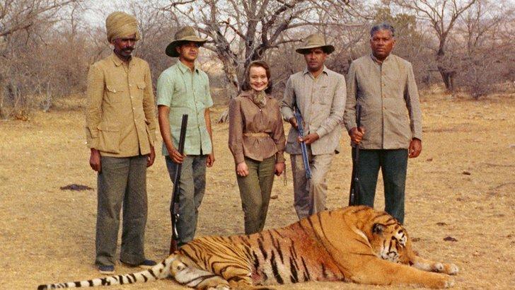 Shot tiger